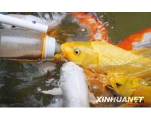 研究发现:鱼类其实挺聪